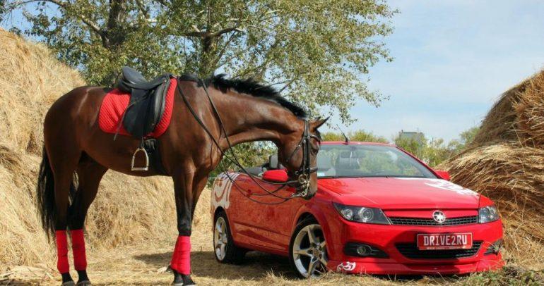 بالفيديو: ما علاقة الحصان بقوة السيارة.. ومن الأسرع؟