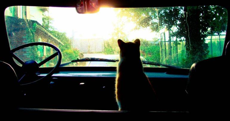 قد لا تصدق.. القطط قادرة على صيانة وتطوير سيارتك !