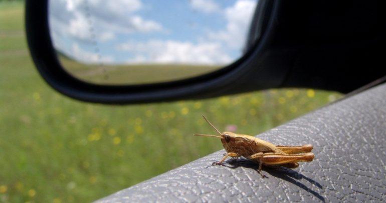 الحيوانات الطائرة والحشرات الزاحفة.. العدو الأكبر لسياراتكم