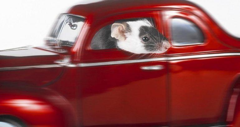 """نصائح لحماية سيارتك من عدوها الخفي: """"القوارض"""""""